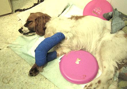 Ayúdanos a saldar los gastos veterinarios de Sarai