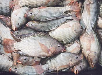Un nuevo informe muestra la enorme escala de sufrimiento en la pesca comercial