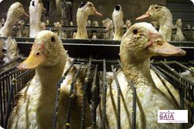 California prohíbe la venta de foie