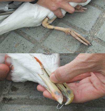 Aves marinas en peligro