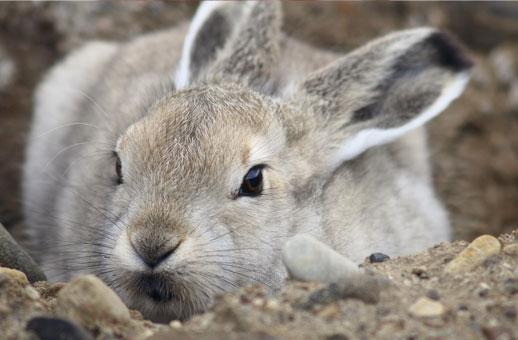 Denuncia contra el sindicato ASAJA  por soltar varios conejos durante un acto reivindicativo