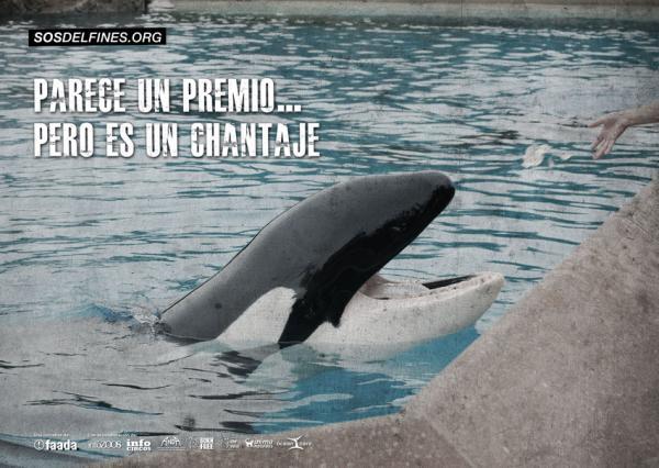 La plataforma SOSdelfines no se sorprende con la muerte de la orca Vicky en Loro Parque