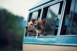 �Voy contigo! Vacaciones con tu animal de compa��a (I)