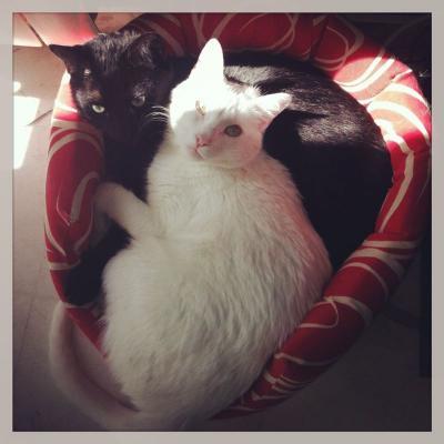 Desmontando el mito de la inmunodeficiencia felina: convivir no significa contagiarse