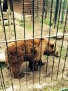 Mimo y Aran, los dos osos de Arties siguen esperando su liberaci�n