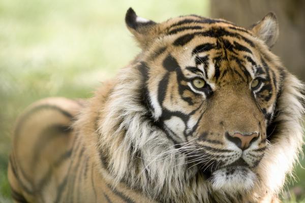 Ven con nosotros a conmemorar el día Mundial del Tigre al Parque de la Ciutadella