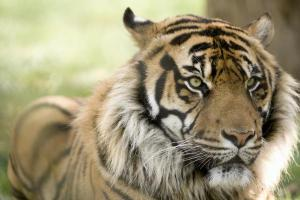 Ven con nosotros a conmemorar el d�a Mundial del Tigre al Parque de la Ciutadella