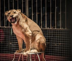 Catalunya da un paso m�s en favor de los animales prohibiendo su uso en los circos