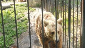 Situaci�n actual de los osos de Arties