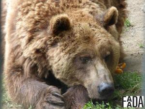 El Ayuntamiento de Arties y el gobierno de Ar�n siguen neg�ndose al traslado de los osos Mimo y Ar�n
