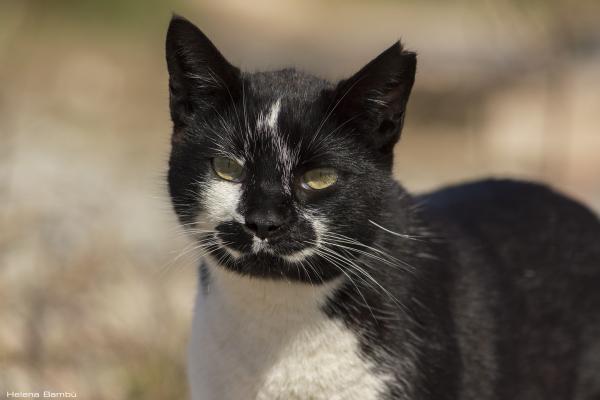 Test innecesarios y sacrificios injustificados en los gatos de colonia