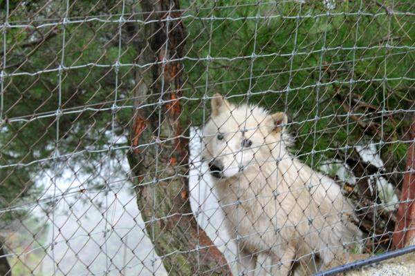 Al menos 11 animales muertos en 8 meses en el zoo de Peña Escrita a la espera de traslado