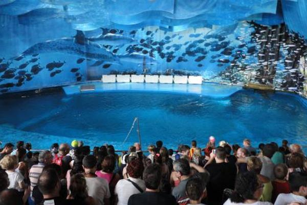 Siguen las gestiones para conseguir el cierre del delfinario de Barcelona