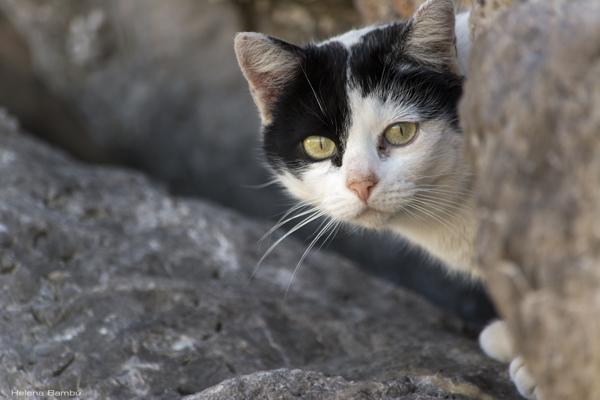 Detengamos el exterminio de los gatos de La Tallada d'Empordà