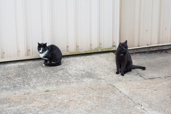 Buenas intenciones del consistorio para los gatos de Tallada de l'Empordà