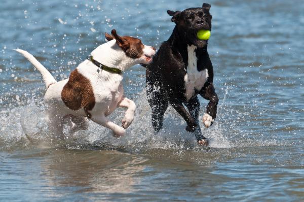 Se pone en marcha la prueba piloto de la playa para perros de Barcelona