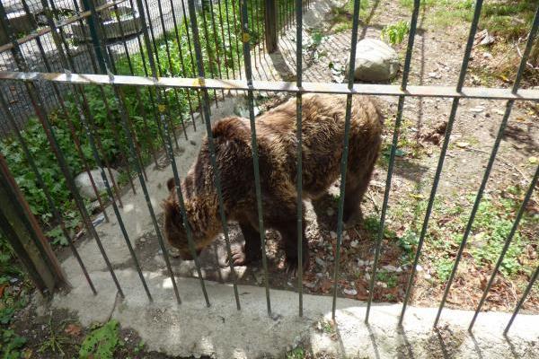 Mimo y Arán o la extrema dificultad de trasladar animales salvajes