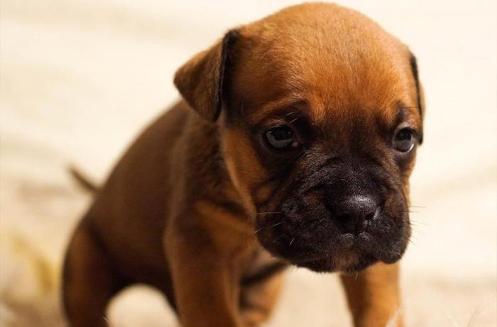 ¿Has sido víctima de estafa comprando un animal en Milanuncios? ¡Cuéntanoslo!
