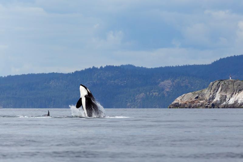 Facilitamos material educativo sobre los cetáceos a escuelas de Cataluña y Baleares