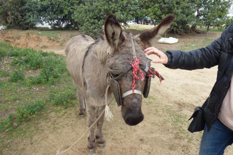 ¡El burro de Mataró ya está en Santuario ADE!