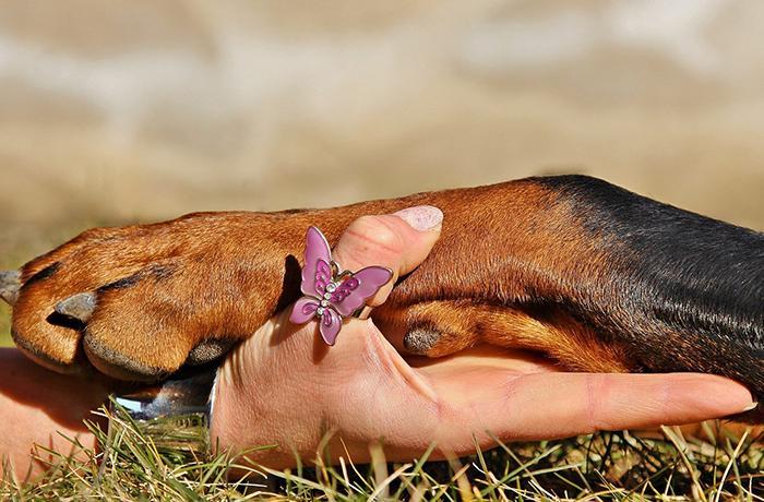 Nuevo libro sobre animalismo y defensa animal de varios filósofos