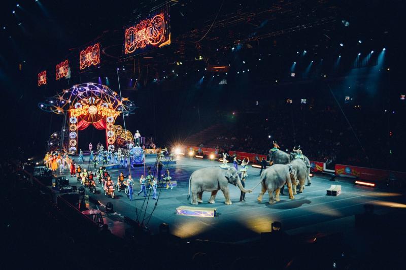 ¡4 nuevos municipios libres de circos con animales!