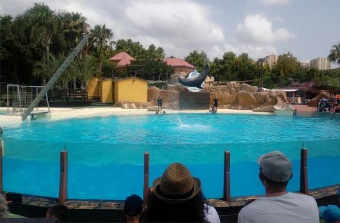 Denunciamos a Aquopolis por mantener a 6 delfines en una piscina de olas
