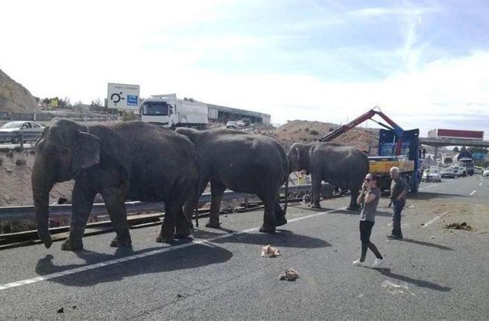 Pedimos a la Unión Europea que prohíba los circos con animales