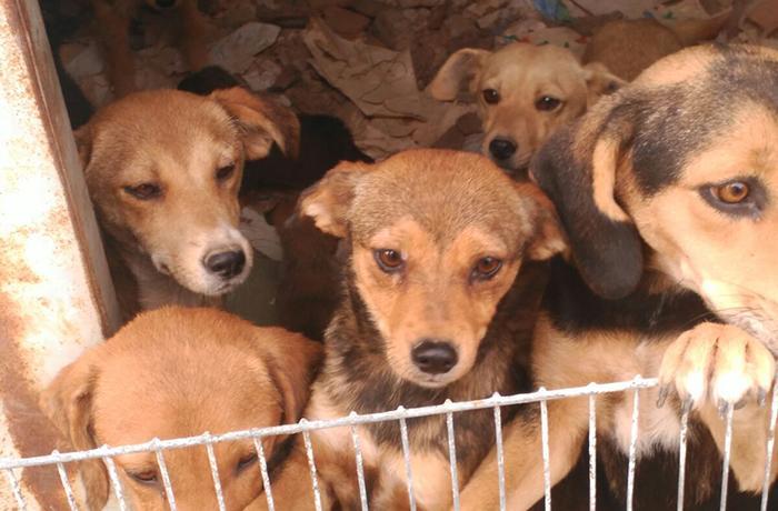 Solicitamos un delito de maltrato animal por cada uno de los animales víctimas de la pareja de Avinyó