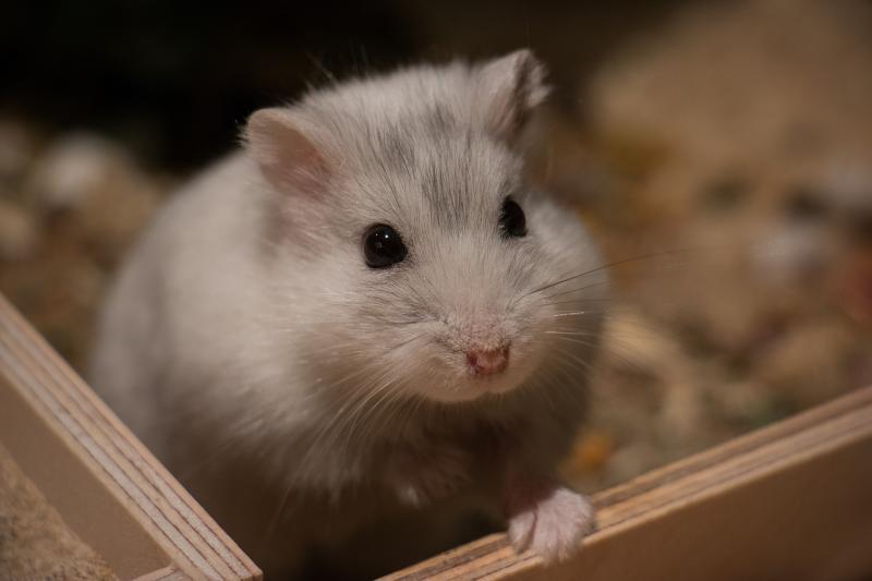 Conseguimos el decomiso de animales en venta en tiendas KIWOKO