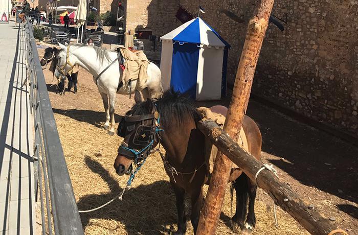 Contactamos con todos los municipios de Cataluña donde se celebran ferias con animales