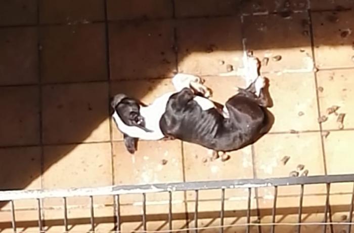 Decomisado un perro maltratado a una familia reincidente