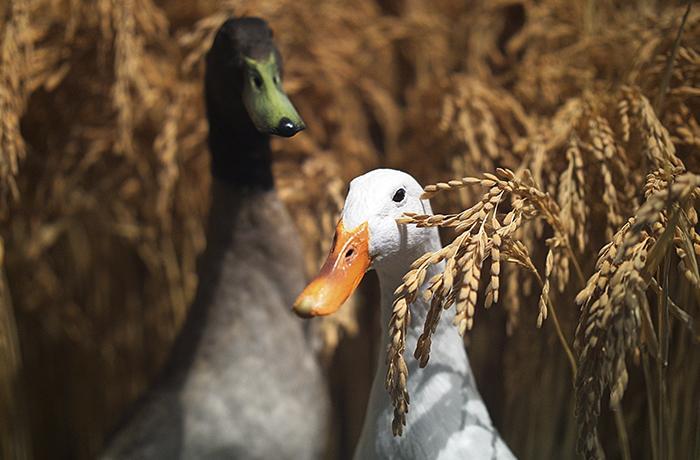 Carlos de Inglaterra prohíbe el foie en defensa de los patos