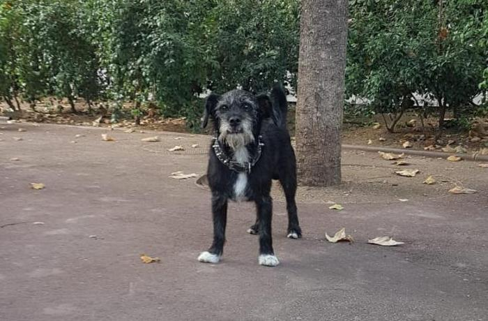 Por primera vez una persona sin hogar puede alojarse con su perro en un centro de acogida público de Barcelona
