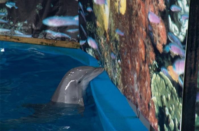 Los delfines de Barcelona irán a un santuario, pero tendrán que esperar