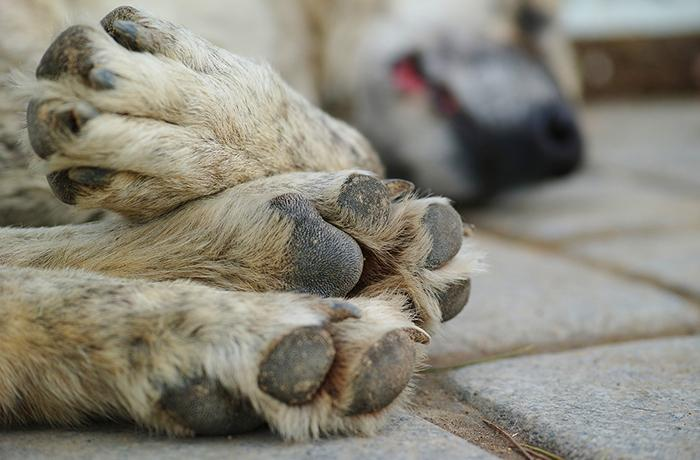 Valencia tendrá un registro de maltratadores de animales
