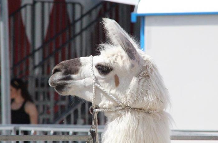 Nuevos municipios libres de circos con animales en España