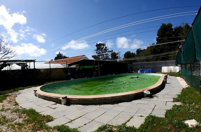 ¿Dónde está Martinha? Se desconoce el paradero del delfín mantenido durante una década en la piscina de un patio en Portugal