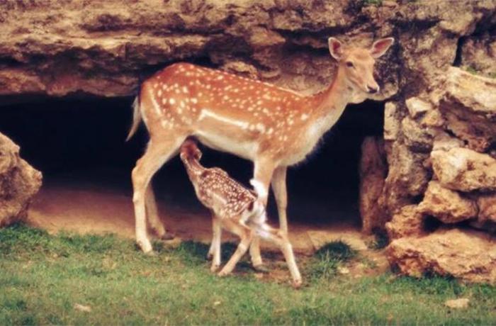 Exigimos medidas contra Chocolates Torras por su zoo ilegal