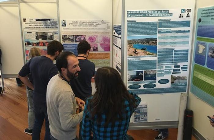 Presentamos el concepto de santuario marino en el Congreso anual de la Sociedad Española de Cetáceos