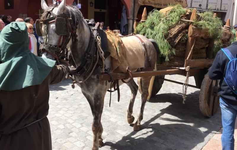 Pedimos que Mataró acabe con el uso de animales en fiestas tradicionales