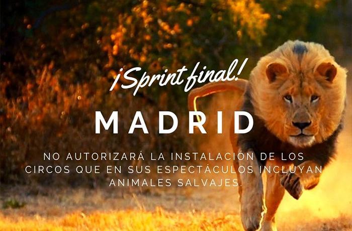 Recta final para acabar con los circos con animales salvajes en Madrid