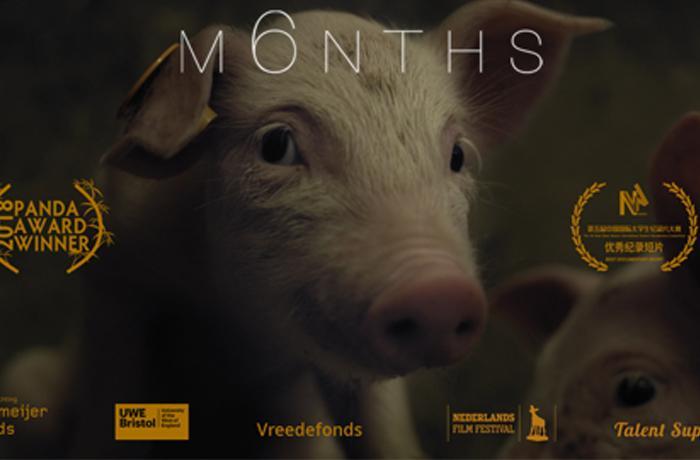 ¡Mira el cortometraje M6NTHS y ayúdanos a acabar con las jaulas!