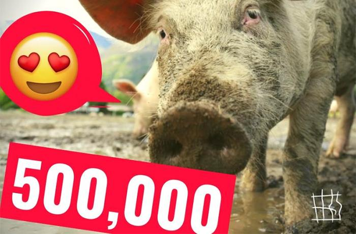 ¡#EndTheCageAge alcanza el medio millón de firmas!