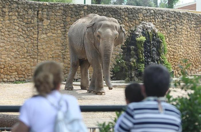 Muere la elefanta Flavia tras 42 años sola en el zoo de Córdoba