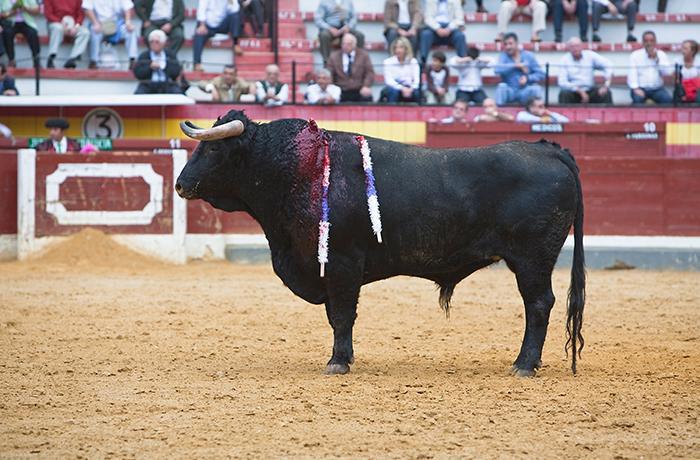 El Ayuntamiento de Barbanza se desmarca de la organización y financiación de la tradicional corrida de toros