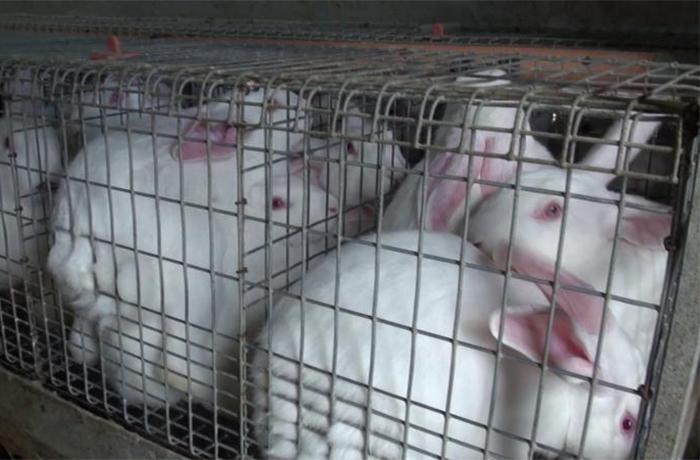 Resultado de imagen de conejos enjaulados