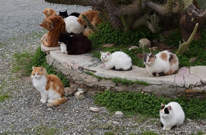Aplaudimos a Caldes d'Estrac por su gestión de las colonias de gatos