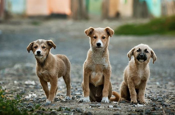 Urgen casas de acogida o adoptantes para estos cachorros