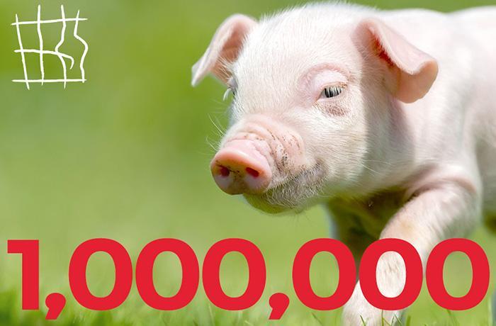 """¡Llegamos al millón de firmas! Hacemos historia para los animales """"de granja""""!"""